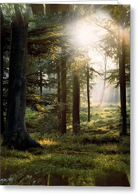 Mario Carini Greeting Cards - Tranquil Forest Scape Greeting Card by Mario Carini