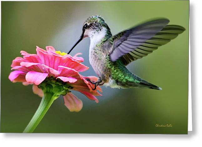 Hovering Greeting Cards - Tranquil Joy Hummingbird Square Greeting Card by Christina Rollo