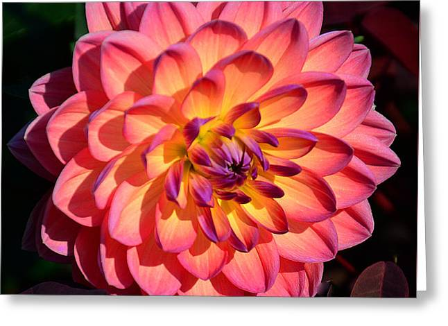Warm Tones Greeting Cards - Tranquility Greeting Card by Cindy Manero