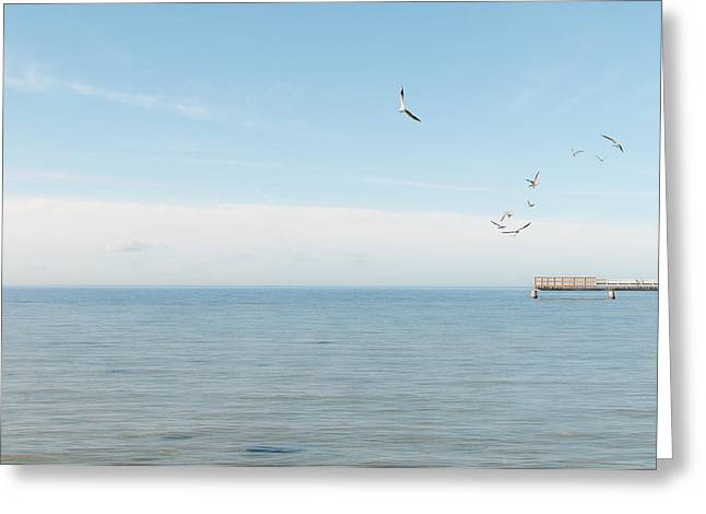 Flying Seagull Greeting Cards - Tranquility Greeting Card by Marcus Karlsson Sall