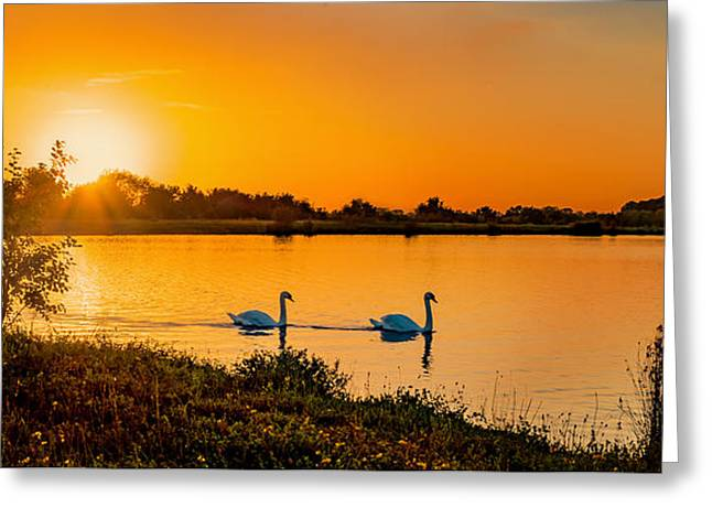Swans... Greeting Cards - Tranquility Greeting Card by Nick Bywater