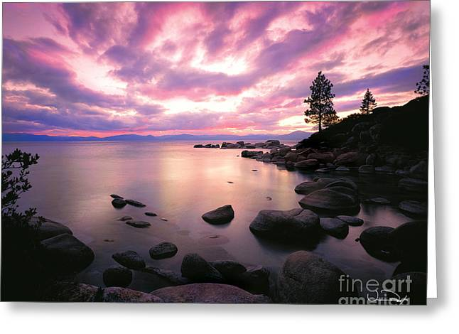 Purples Greeting Cards - Tranquility  Greeting Card by Vance Fox