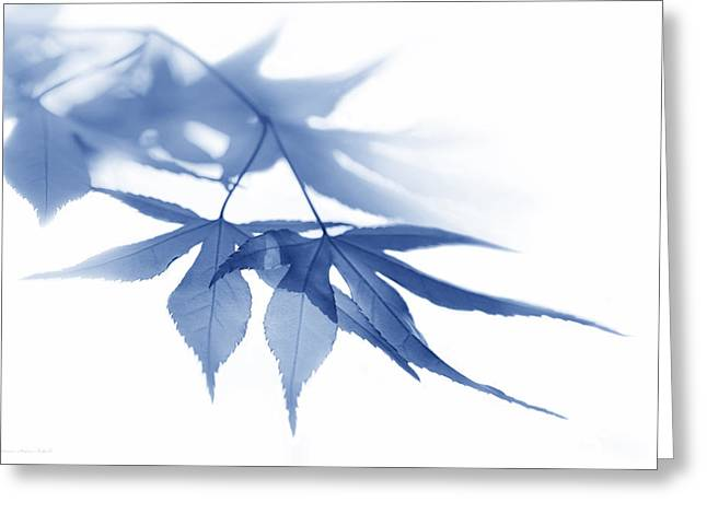 White Photographs Greeting Cards - Translucent Blue Leaves Greeting Card by Jennie Marie Schell