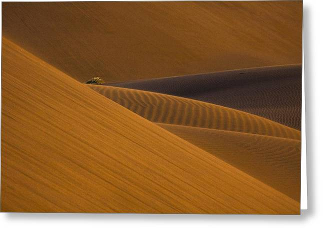 Desert Greeting Cards - Trapped ... ! Greeting Card by Ali Barootkoob