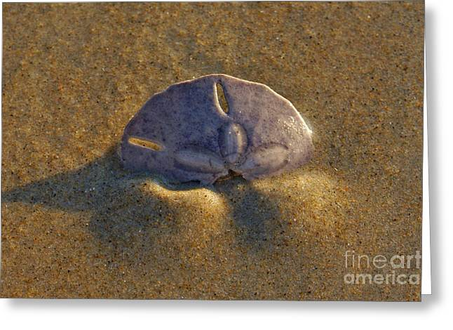 Beach Photography Greeting Cards - Treasure Greeting Card by Christopher  Ward