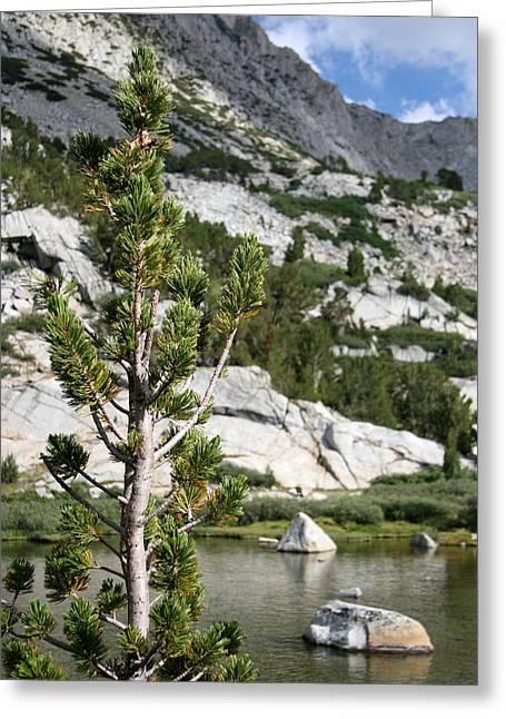 Treasures Greeting Cards - Treasure Lake Pine Greeting Card by Chris Brannen