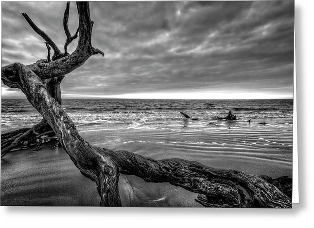 Treasures By The Sea Black And White Greeting Card by Debra and Dave Vanderlaan