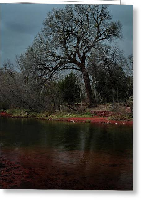 Storm Clouds Pyrography Greeting Cards - Tree against Storm Clouds Greeting Card by Rick Strobaugh