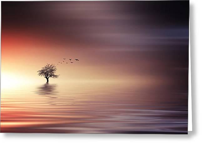 Tree And Birds On Lake Sunset Greeting Card by Bess Hamiti