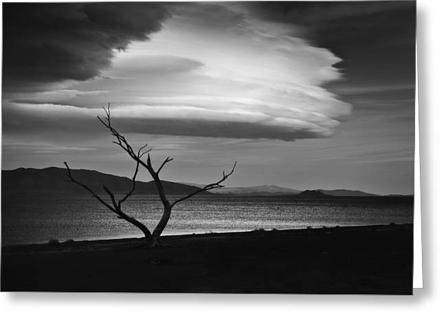 Landscape Photographer Greeting Cards - Tree and Cloud Greeting Card by Kurt Golgart