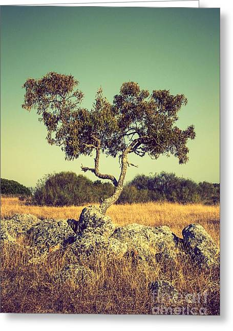 Small Trees Greeting Cards - Tree and Rocks Greeting Card by Carlos Caetano