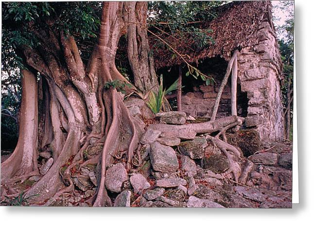 Tree and Ruins in Cozumel Greeting Card by Thomas Firak