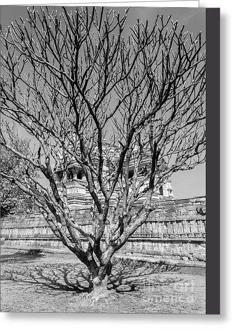 Bare Trees Greeting Cards - Tree and Temple Greeting Card by Hitendra SINKAR