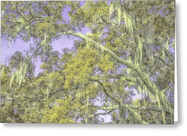 Moss Greeting Cards - Tree Art Greeting Card by Louise Hill