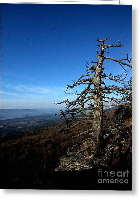 Mt Magazine Greeting Cards - Tree at Mt. Magazine Greeting Card by Steve Grisham