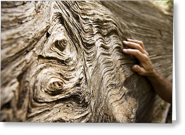 Wood Carving Greeting Cards - Tree Bark And Hand Greeting Card by Dawn Kish