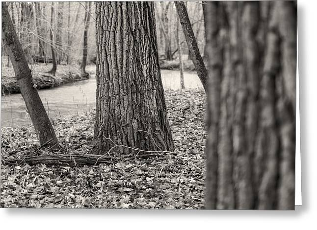 Petrifying Springs Greeting Cards - Tree Bark Depth Greeting Card by Chris Tobias