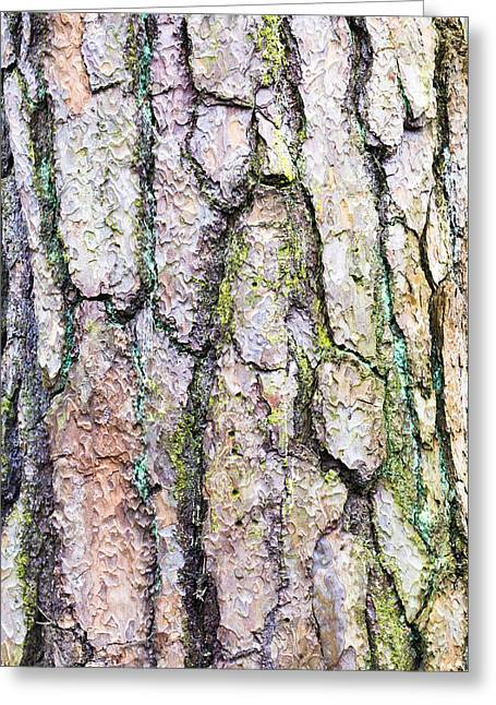 Maturity Greeting Cards - Tree bark Greeting Card by Tom Gowanlock