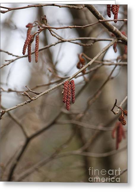 Warm Tones Greeting Cards - Tree Branches 2 Greeting Card by Carolyn Brown
