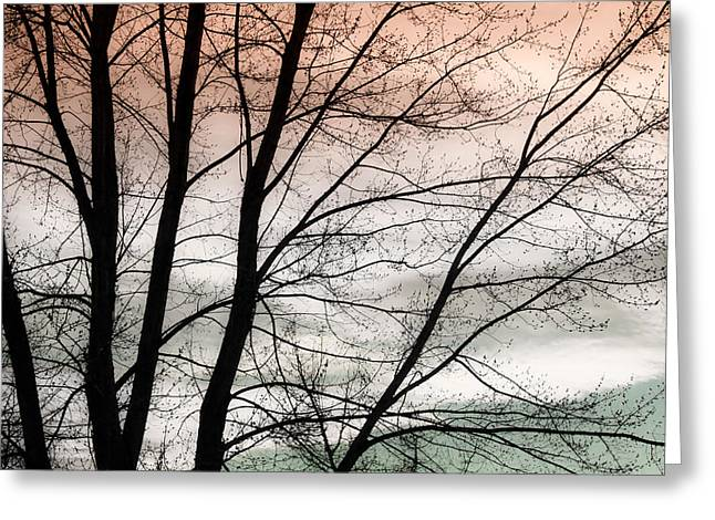 Sunset Canvas Art Greeting Cards - Tree Branches  Greeting Card by James BO  Insogna