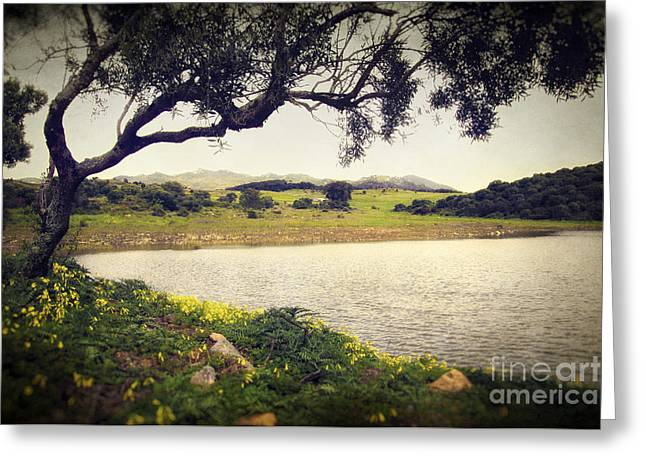 Gloaming Greeting Cards - Tree by the Lake Greeting Card by Carlos Caetano