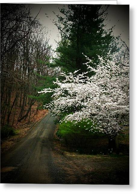 Tree By The Road Greeting Card by Joyce Kimble Smith