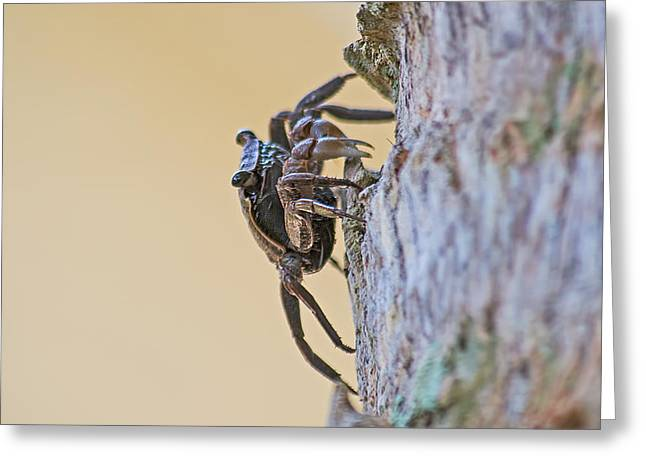 Tree Climbing Crab Greeting Card by Kenneth Albin