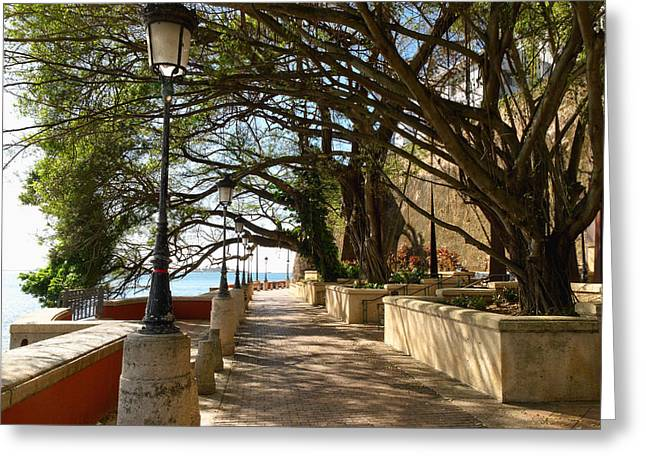 Paseo La Princesa De San Juan Greeting Cards - Tree Covered Walkway San Juan Greeting Card by George Oze