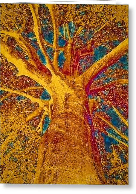 Tree Crown Greeting Card by Frank Tschakert