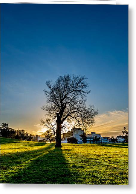 Garden Scene Greeting Cards - Tree Greeting Card by David Vale