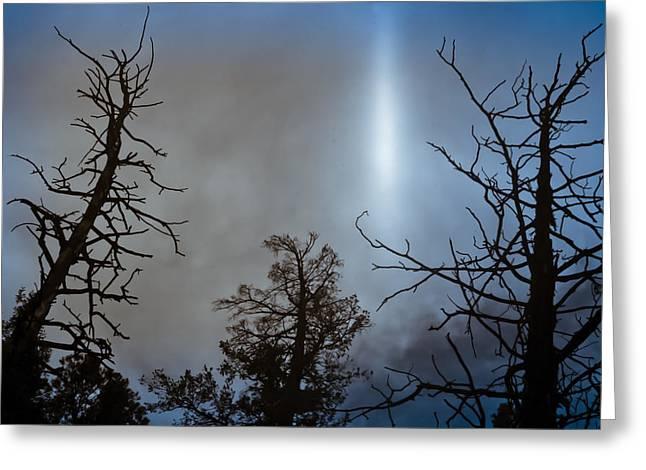 Tree Flash Greeting Card by Scott Sawyer