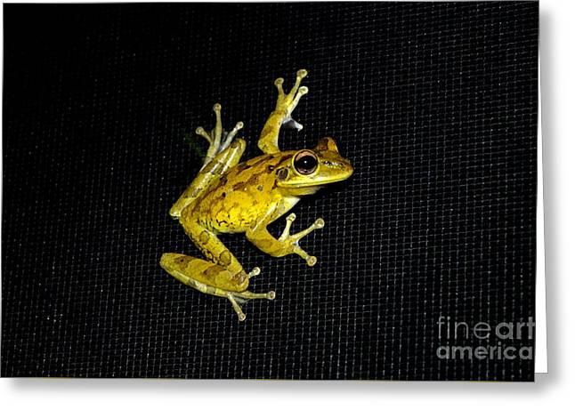Tree Frog Escape Greeting Card by Glenn Forman