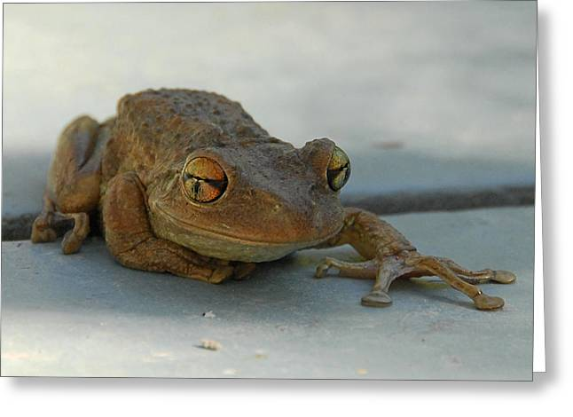 Tree Frog Greeting Cards - Tree Frog Out for a Walk Greeting Card by Alan Lenk