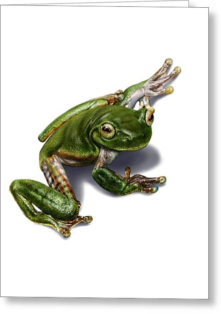 Tree Frog Greeting Cards - Tree Frog  Greeting Card by Owen Bell