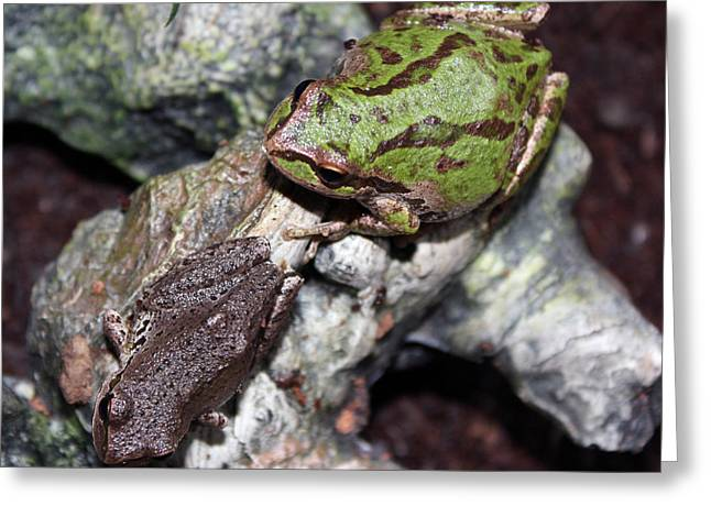 Tree Frog Greeting Cards - Tree Frogs Greeting Card by Nick Gustafson