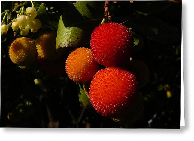 Tree Fruit Greeting Card by Terry Perham