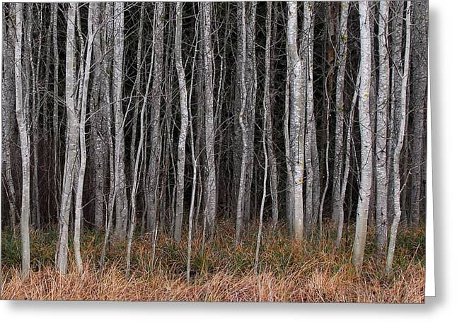 Tree Lines Digital Greeting Cards - Tree Grove Greeting Card by Bill Kellett