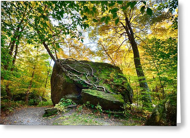 Tree Growing From Living Rock On Smuggler's Notch Greeting Card by Jeff Folger