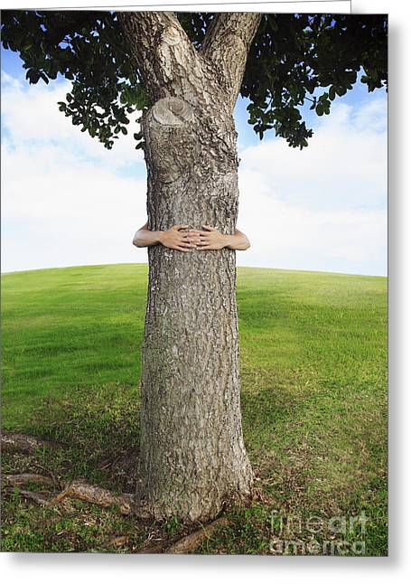 Tree Hugger 3 Greeting Card by Brandon Tabiolo - Printscapes