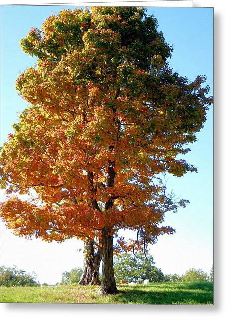 Tree In Autumn 1 Greeting Card by Lanjee Chee
