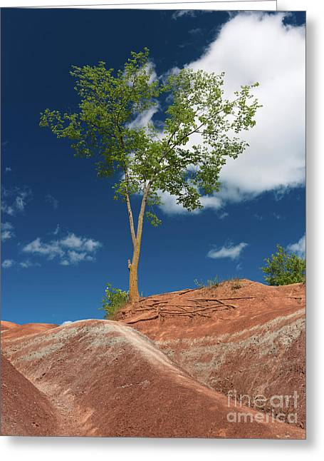 Red Clay Greeting Cards - Tree in Badlands Greeting Card by Oleksiy Maksymenko