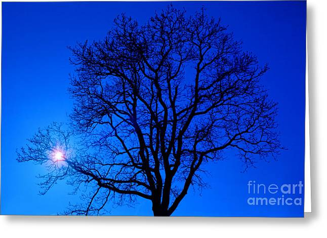Bare Trees Greeting Cards - Tree in blue sky Greeting Card by Silvia Ganora