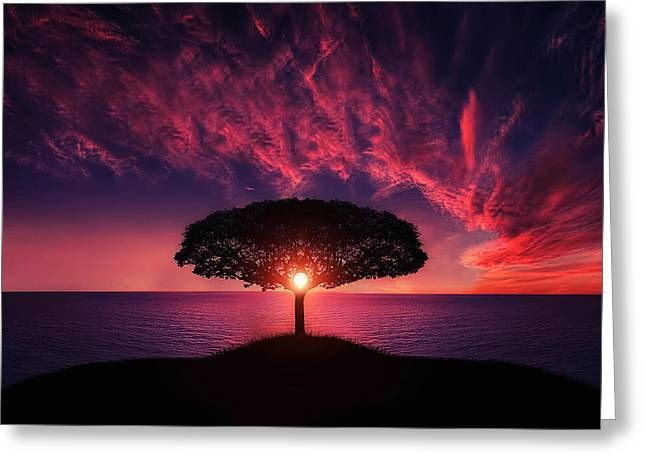 Light Rays Greeting Cards - Tree in sunset Greeting Card by Bess Hamiti