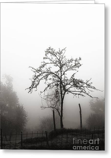Nebbia Greeting Cards - Tree in the mist Greeting Card by Luigi Morbidelli