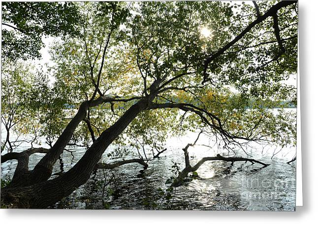 Trees In Autumn Greeting Cards - Tree in water Greeting Card by SK Pfphotography