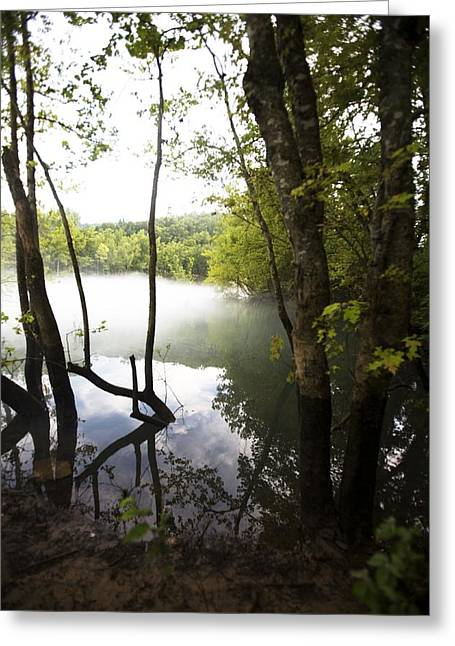 Bayou Greeting Cards - Tree Landscape With Foggy Water Greeting Card by Gillham Studios