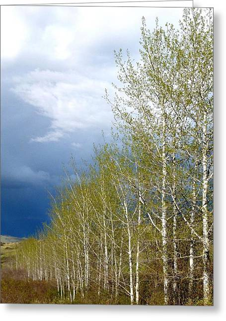 Intrigue Greeting Cards - Tree Line Greeting Card by Will Borden
