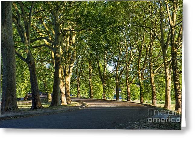 Chateau Greeting Cards - Tree-lined Avenue Greeting Card by Brian Jannsen