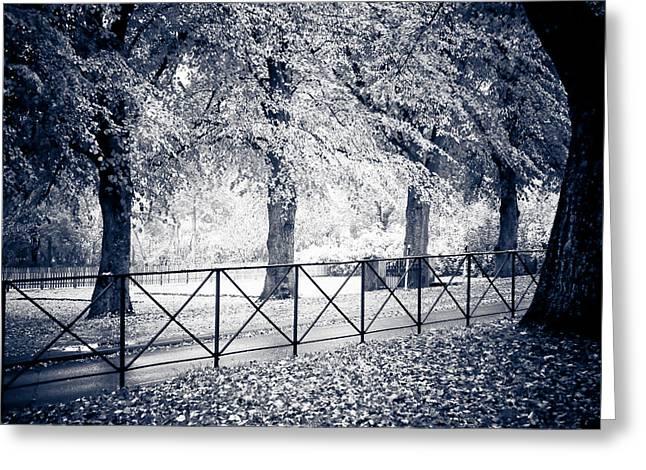 Tree Lined Greeting Card by Maggie Terlecki