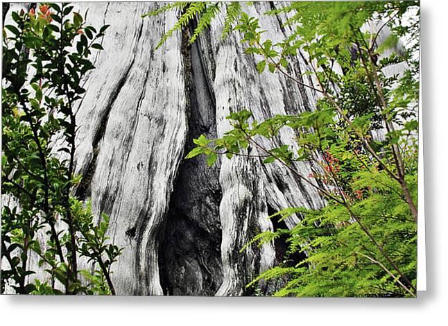 Tree of Life - Duncan Memorial Big Western Red Cedar Greeting Card by Christine Till